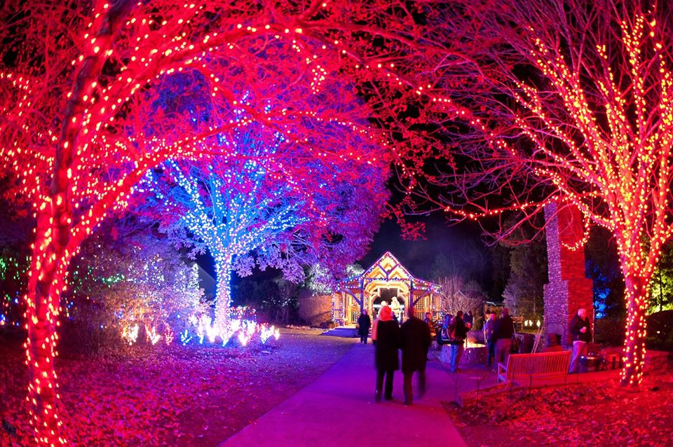 Outdoor Christmas Lights Trees